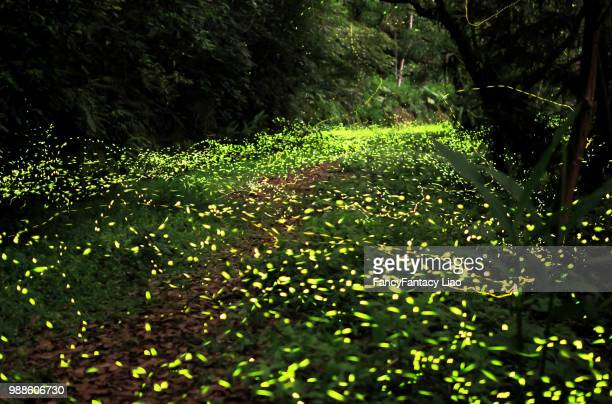 lugu,taiwan - glowworm stock pictures, royalty-free photos & images