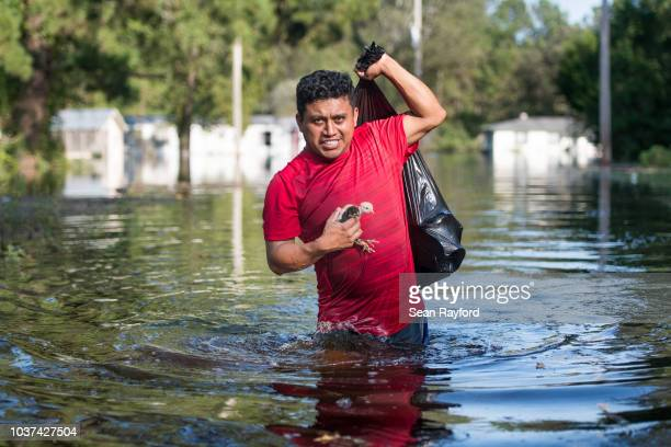 Luis Gomez rescues baby chicks from floodwaters caused by Hurricane Florence near the Todd Swamp on September 21 2018 in Longs South Carolina...