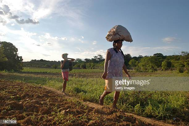 Luisa Francisca da Conceiao Silva walks home with her daughter after working on her plot February 14 2003 in Acaua Brazil Luisa her husband and five...