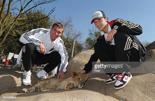 Lukas Podolski and Mesut Oezil of the German National Team stroke a lion cup during a visit at the Lion Park on June 25 2010 in Lanseria South Africa
