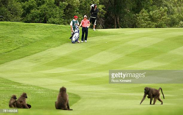 Luke Donald of England and his caddie Luke on the par four 3rd hole with Baboons of the fairway during the first round of the Nedbank Golf on the...
