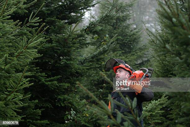 Luke Forest a Forestry Worker for The Crown Estate working on the Queen's Windsor Great Park prepares to fell a Christmas tree to be donated to the...