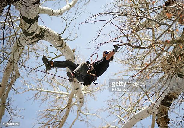 Luke Glines a arborist climbs and trains in trees at his place in Greeley March 12 2015 Glines will soon be competing in the International Tree...