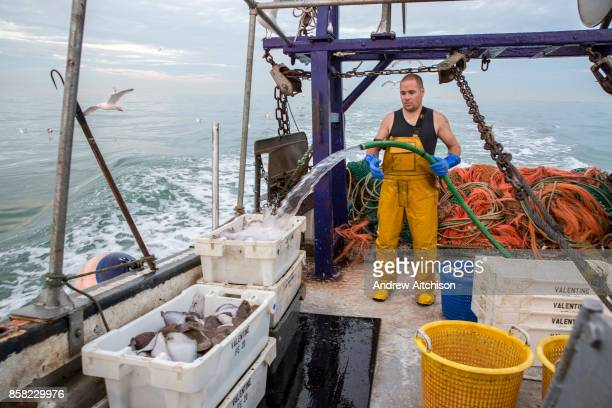 Luke guts and washes the fish of the last catch of the night and boxes them up with ice to keep fresh and ready for market Luke is a Folkestone based...