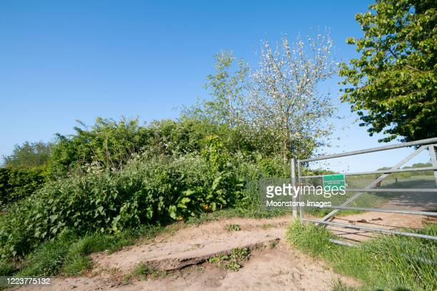 lullingstone country park in eynsford, england - nature reserve stock pictures, royalty-free photos & images
