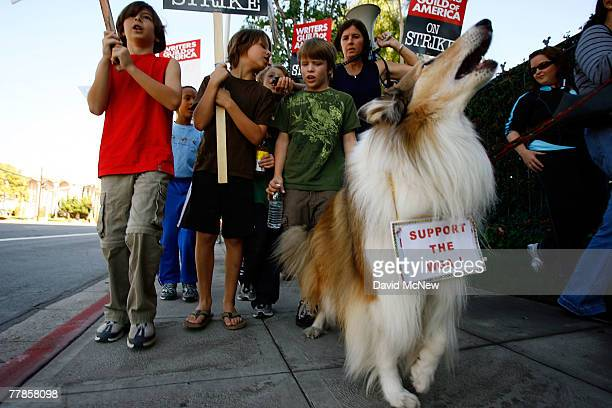 Lulu a film acting collie related to the original Lassie of the eponymous Disney show barks while children out of school for Veterans Day chant with...