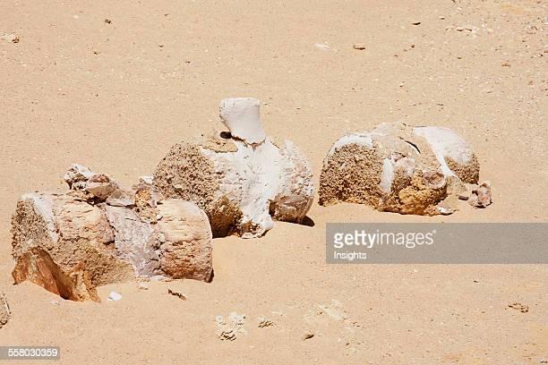 Lumbar And Tail Vertebrae Of A Basilosaurus Whale In Wadi AlHitan El Fayoum Egypt
