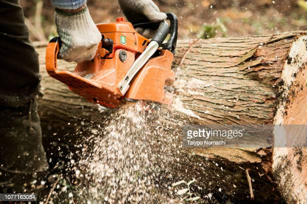 a lumber cutting a tree with a chain saw - cortada - fotografias e filmes do acervo