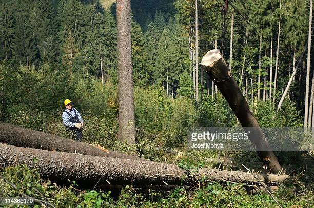 Lumber industry - harvesting system