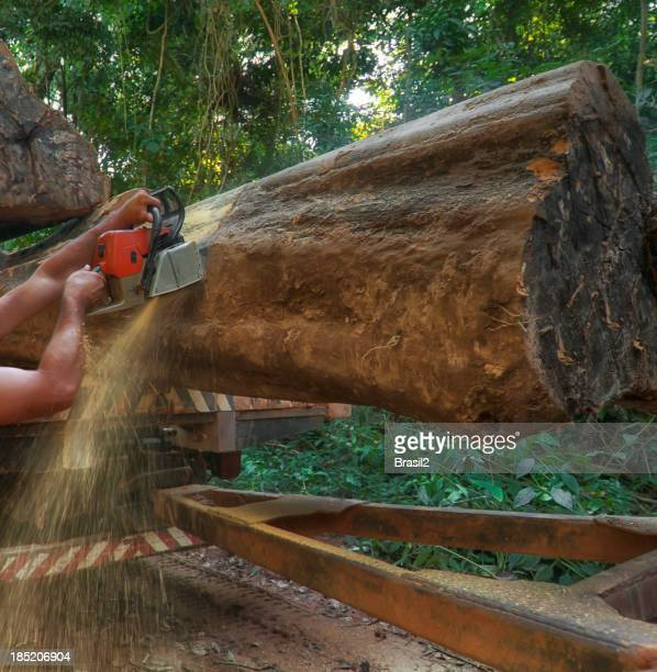 Lumber industry in the amazon