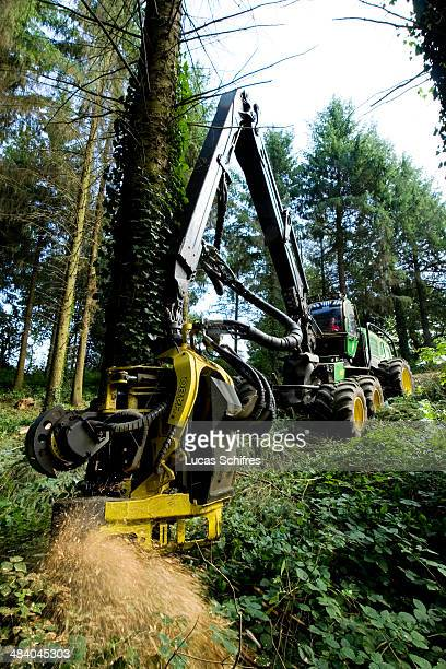 Lumberjack Arnaud Legal operates a John Deere 1270E IT4 machine to cut down spruces in a forest near Rostrenen on September 26 in Brittany France...