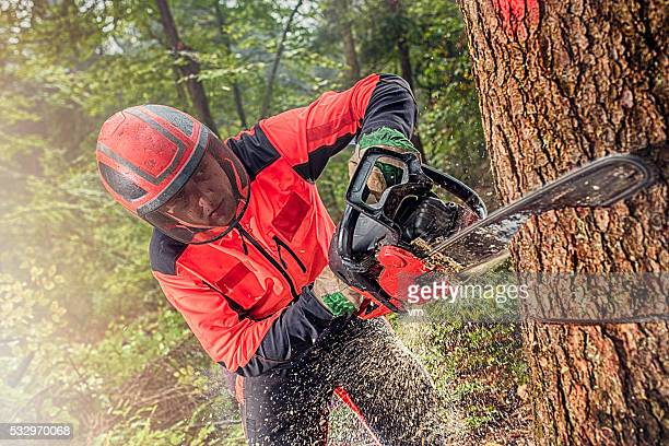 lumberjack at work - deforestation stock pictures, royalty-free photos & images