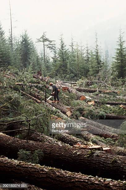 lumberjack cutting fallen trees - 1999 stock pictures, royalty-free photos & images