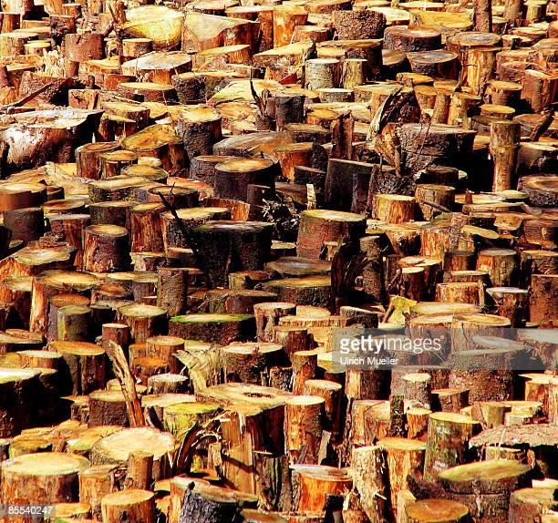 Lumberjack Paradise