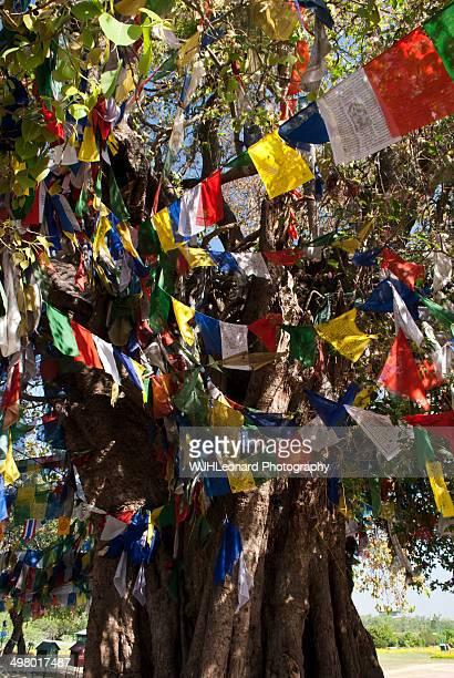 lumbini trunk - lumbini nepal stock pictures, royalty-free photos & images