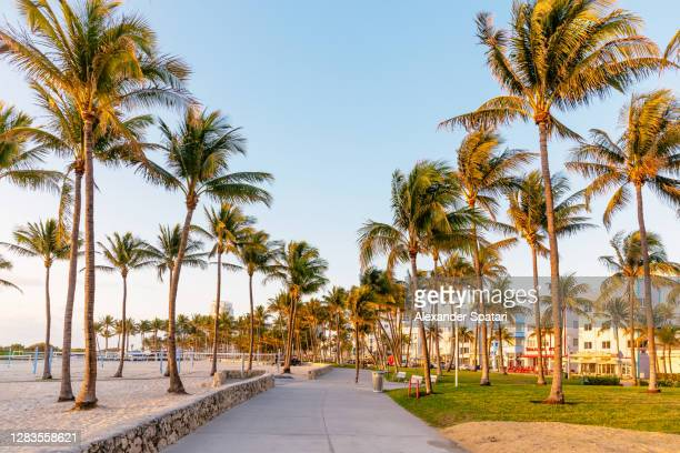 lummus park in the morning, south beach, miami, usa - south beach stock pictures, royalty-free photos & images