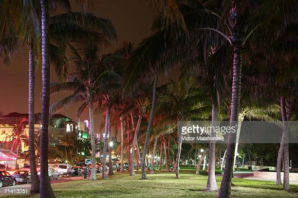 Lummus Park is seen on Ocean Drive July 10 2006 in the South Beach neighborhood of Miami Beach Florida