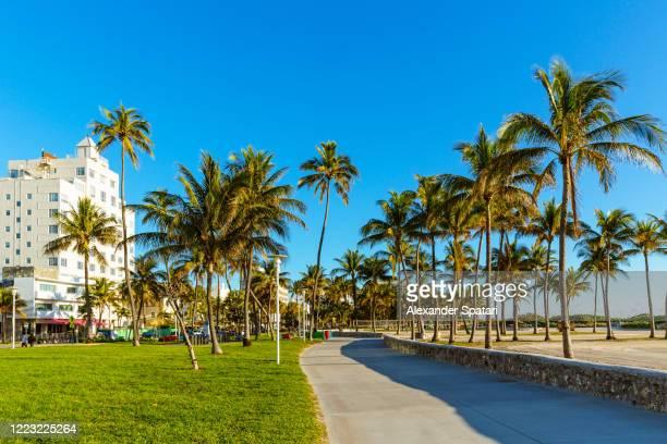 lummus park on a sunny morning with clear blue sky, south beach, miami, usa - miami beach fotografías e imágenes de stock