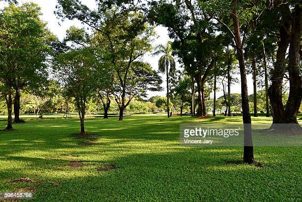 Lumpini park landscape Bangkok Thailand, Asia