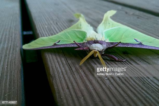 luna moth on wooden table - luna moth stock pictures, royalty-free photos & images