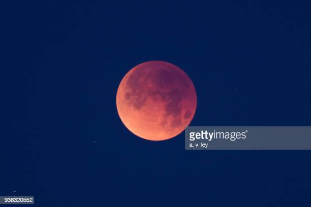 lunar eclipse in morning light - lunar eclipse stock pictures, royalty-free photos & images