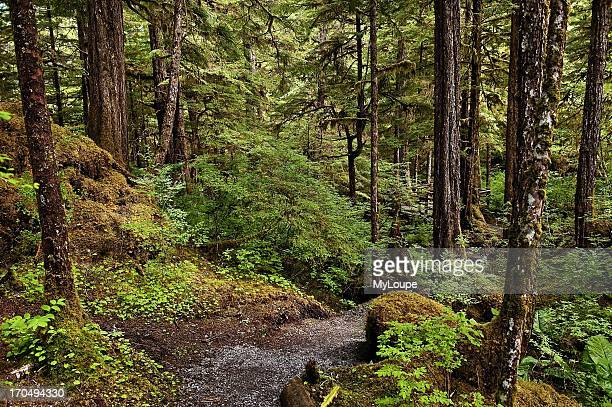 Lunch Creek hiking trail Tongass National Forest Ketchikan Alaska United States largest national forest in the United States