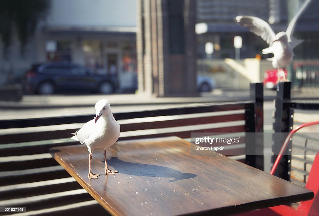 Lunch scraps for pigeons : Stock Photo