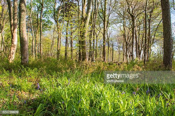 Lunderston Bay woodland, Inverkip, Inverclyde