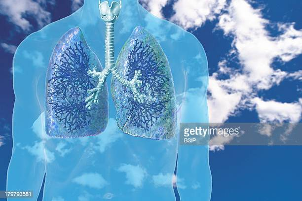 Lung Drawing