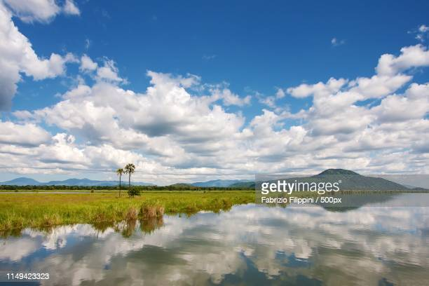 lungo il fiume shire - malawi stock pictures, royalty-free photos & images