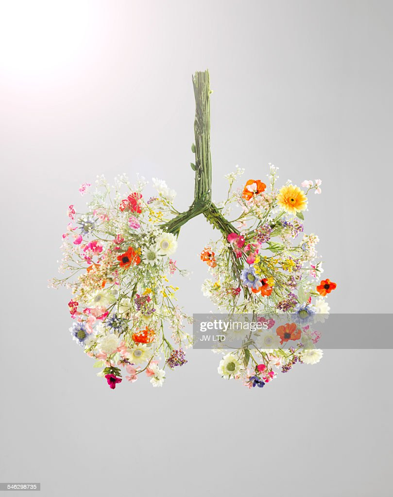 Lungs made from flowers : ストックフォト