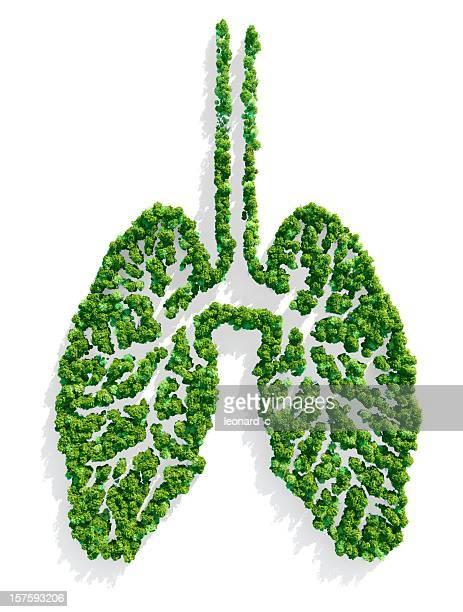 lungs of the planet - carbon dioxide bildbanksfoton och bilder