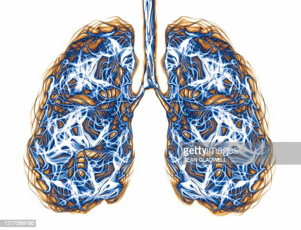 lungs - scientific imaging technique stock pictures, royalty-free photos & images