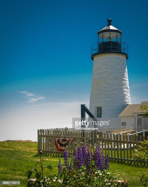 lupine in the lighthouse garden - eastern usa stock photos and pictures