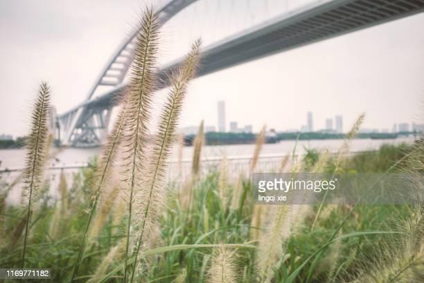 lupu bridge on the huangpu river in shanghai, china - rio huangpu - fotografias e filmes do acervo