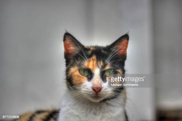 Luquillo stray cat III