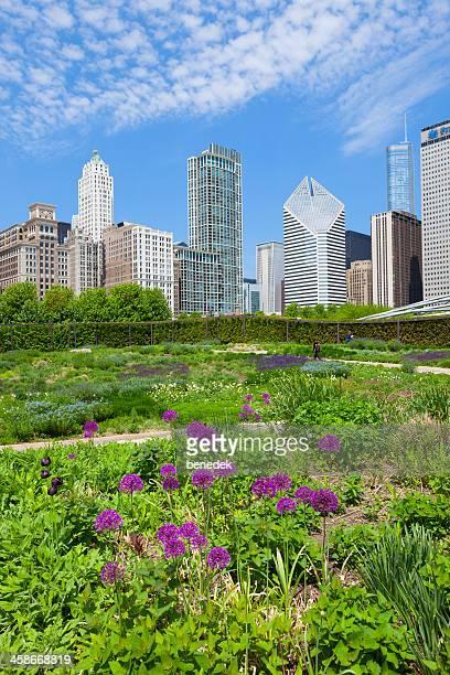 lurie garden at millenium park in chicago illinois usa - millenium park bildbanksfoton och bilder