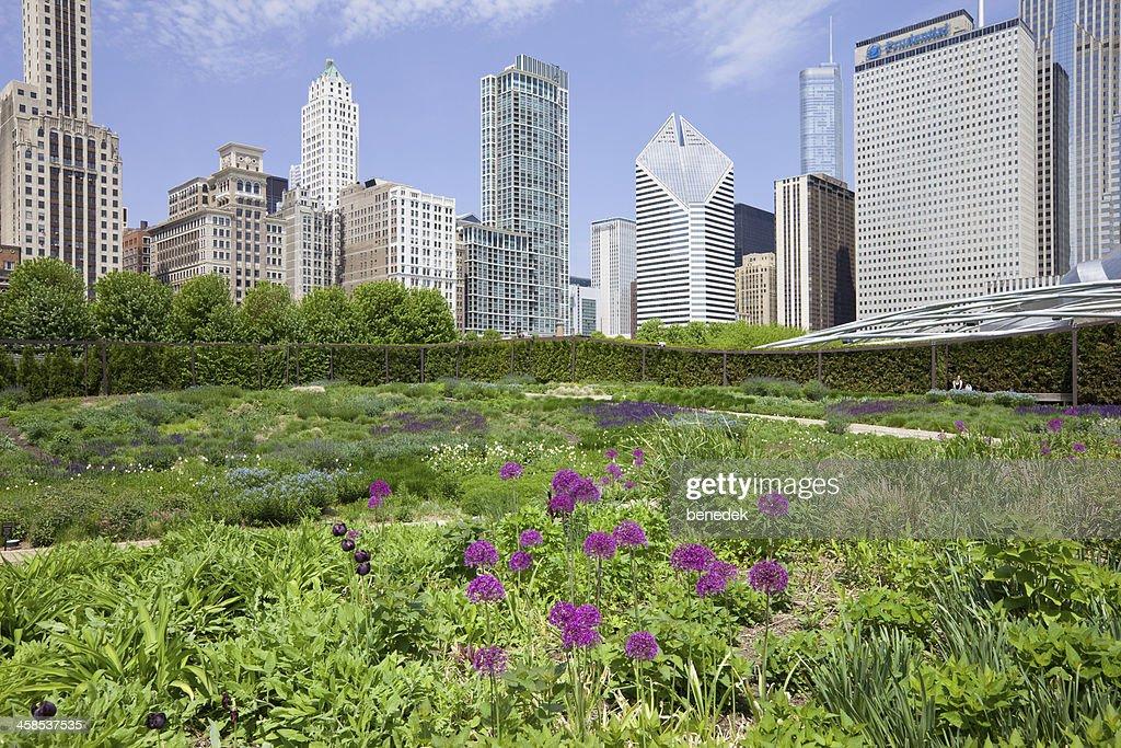 Lurie Garden in Millenium Park Chicago USA : Stock Photo