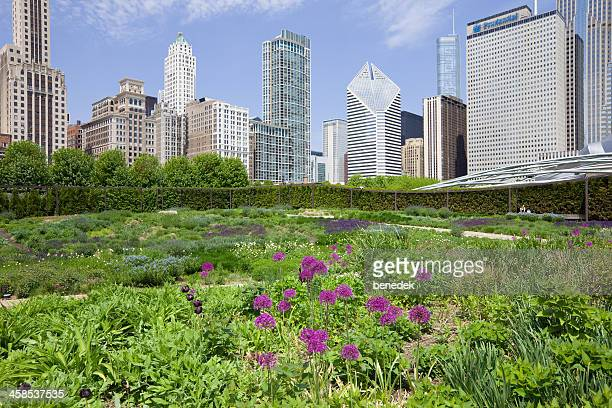 Lurie Garden in Millenium Park Chicago USA