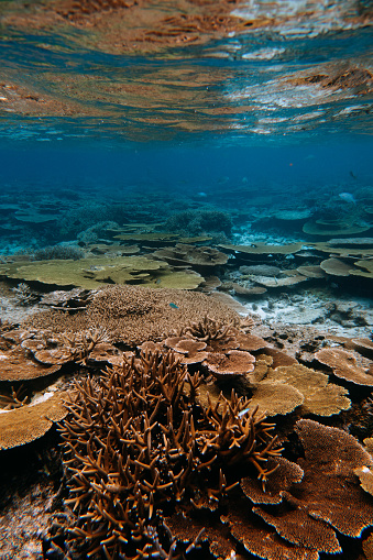 Lush coral reef in southern Japan, Miyakojima Island, Okinawa - gettyimageskorea