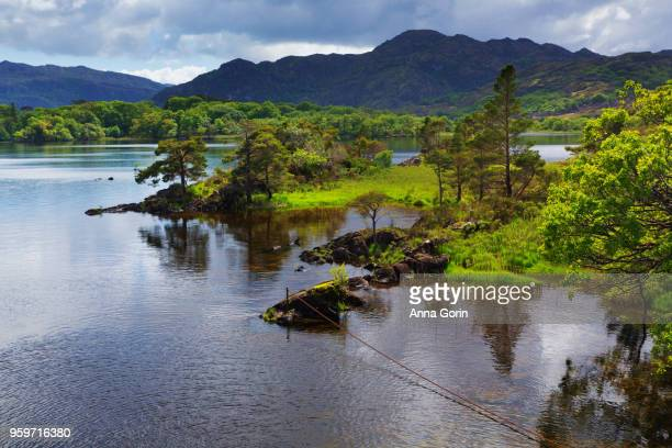 lush foliage along edge of muckross lake, spring afternoon in killarney national park, western ireland - ring of kerry stock photos and pictures