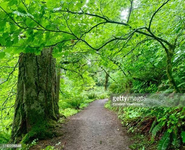 lush foliage along hiking trail - ユージーン ストックフォトと画像