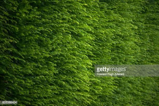 Lush Foliage, Battersea Riverside Cultivated Design & Color