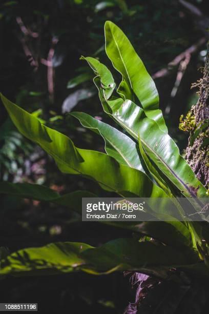 Lush foliage in Binna Burra