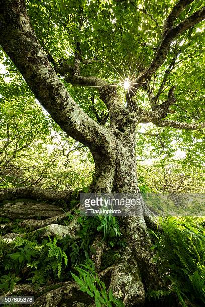 lush forest and sunburst - spiritual enlightenment stock pictures, royalty-free photos & images