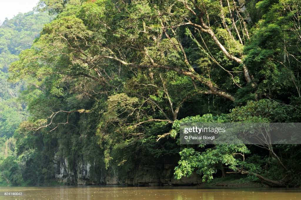 Lush forest on the shores of Ba Be Lake, north Vietnam : Stock Photo