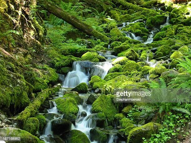 Foresta lussureggiante