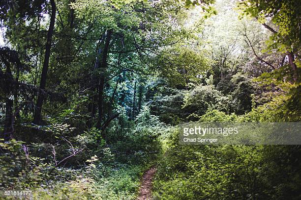 Lush forest scenery, Watchung Reservation, New Jersey, USA