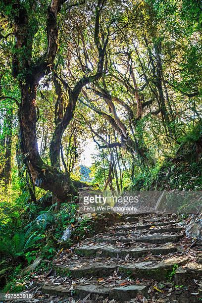 lush forest, tadapani-ghandruk, annapurna region, nepal - annapurna circuit stock photos and pictures