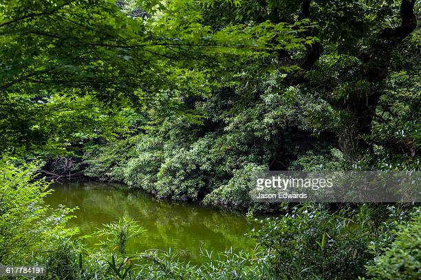 Lush gardens surround a pond in a traditional Japanese garden.